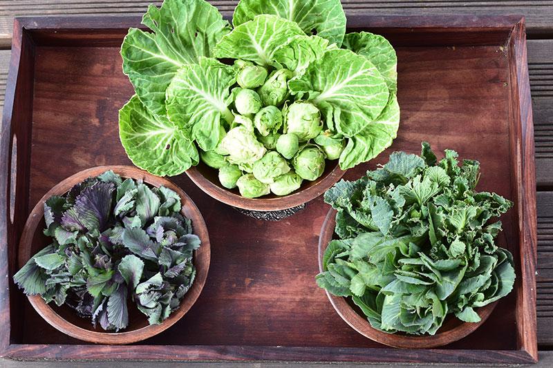 Rosenkohl, Blätter Rosenkohl, Rotkohl, Wirsing